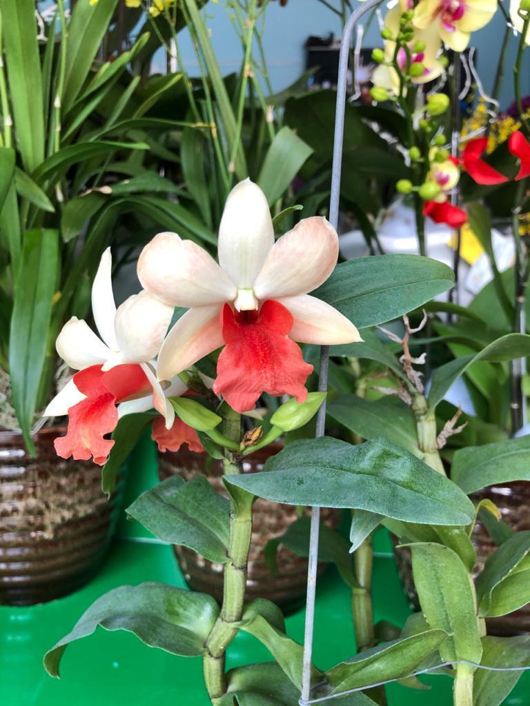 Полюбите орхидею - (продолжение 3)