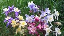 ДОМАШНИЙ ЦВЕТОК - или  цветы, собирающие воду