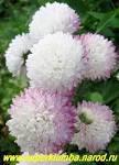 Царственные цветы Фэн-шуй