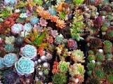 Растения для дома и сада по фэн - шуй