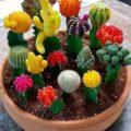 Комнатные цветы в домашних условиях - кактусы