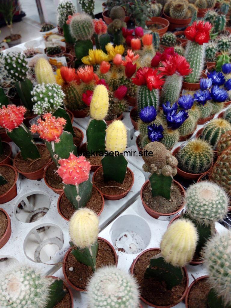 Февраль - уход за растениями