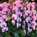 Полюбите орхидею- комнатное растение (на анг.яз)