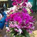 Полюбите орхидею - ДОМАШНИЕ ЦВЕТЫ - (начало)