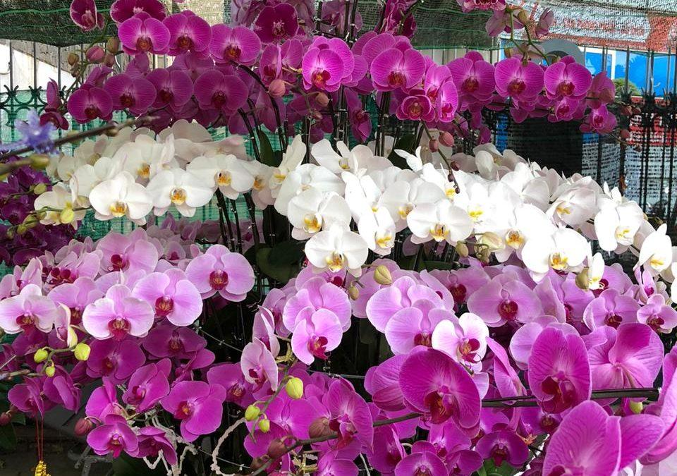 Полюбите орхидею - комнатное растение
